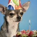 Having a party? Be mindful of what your dog gets fed