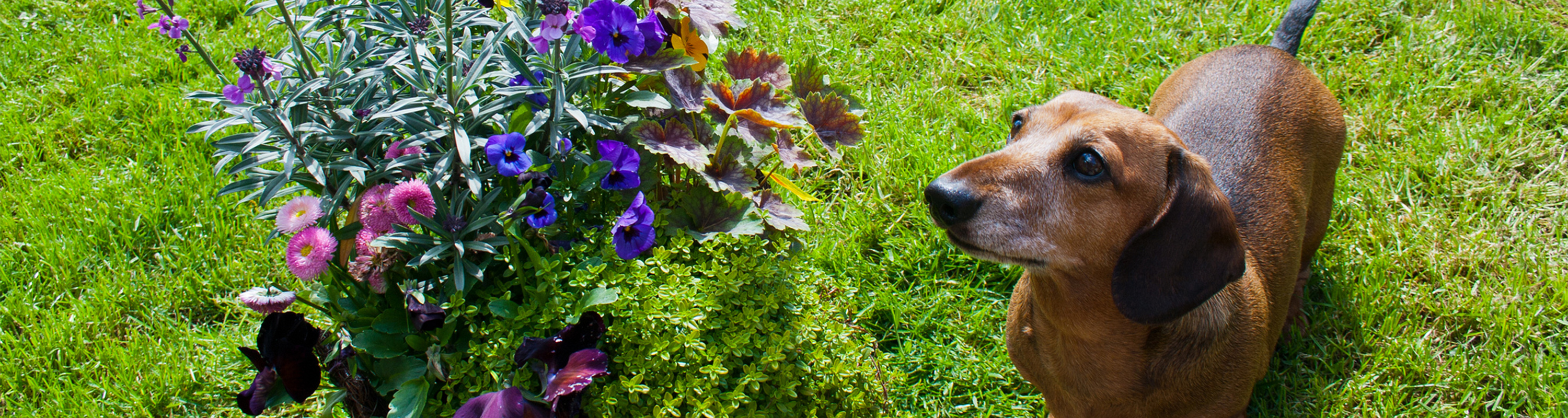 Dog next to flowers